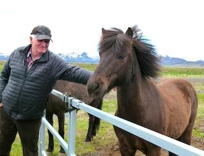 Shore Excursion: Icelandic horses purebred back to days of Viking ancestors