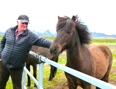 Iceland horses an unusual breed
