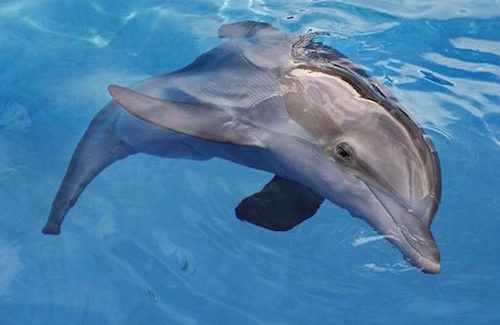 Shore Excursion: Winter's Tale – dolphin survives overwhelming odds, inspires visitors