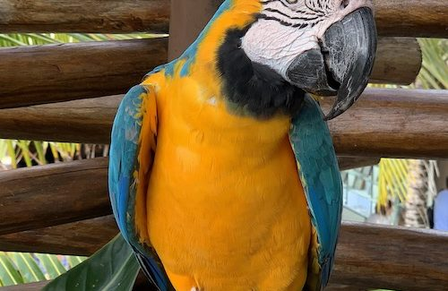 Enjoying a bird's-eye view in Costa Maya's Aviarius